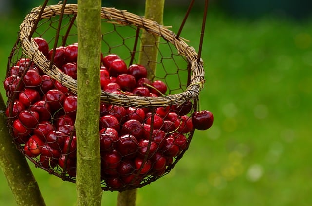 wire basket with cherries